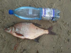 08.10.16 — Костино-Горский. Закрытие рыбного сезона.